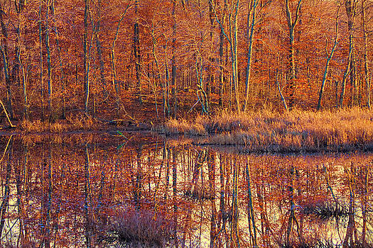 Ipswich River Wildlife Sanctuary by Jeff Folger
