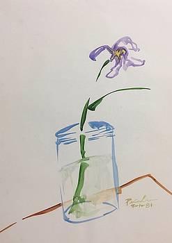 Iris by Ricardo Penalver