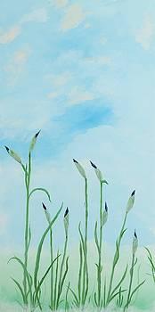 Iris Sky by Deborah Smith