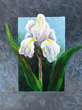 Iris Study by Nancy Goldman