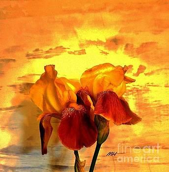 Irises in the Sunshine by Marsha Heiken