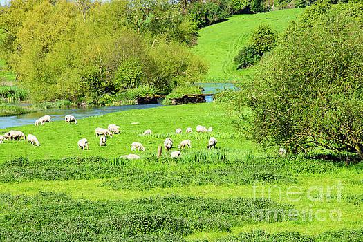 Bob Phillips - Irish Sheep Farm Two