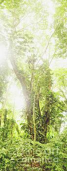 Isle De Los Micos Vertical Panorama by Cassandra Buckley