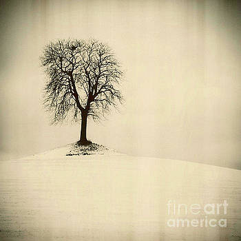 Isolatedtree on a snow covered field by Bernard Jaubert