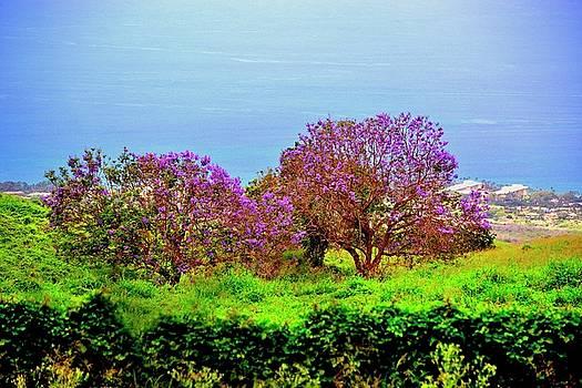 Jacaranda tree of Maui by Gerald Blaine