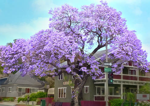 Jacaranda Tree, Wider View by Brian Tada