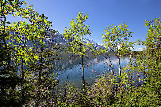 Jackson Lake by Sue Collura