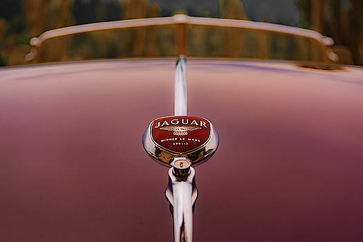 Classic Jaguar by Joy McAdams
