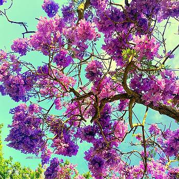 Jane's Jacaranda Tree by VIVA Anderson
