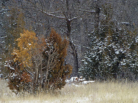 January Grassland Branches by Cris Fulton