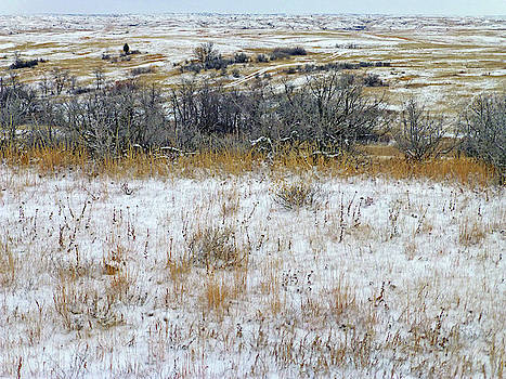 January Prairie Trail by Cris Fulton