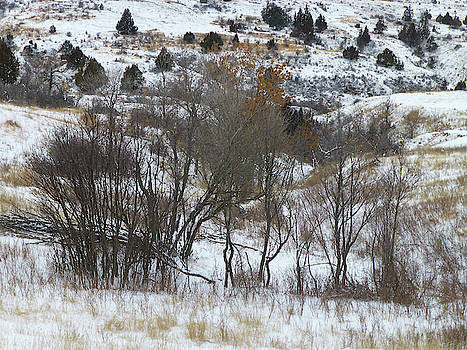 January Tree Lines by Cris Fulton
