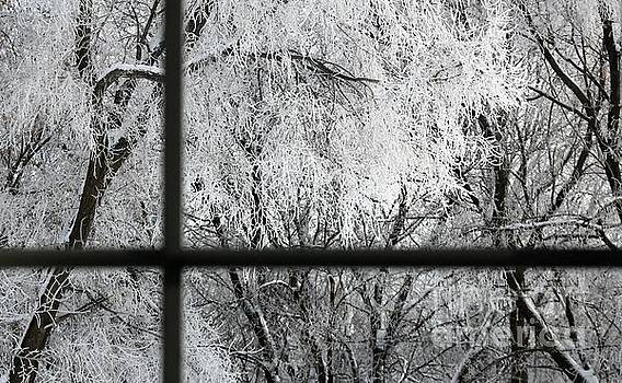 January Windows by Denise Irving