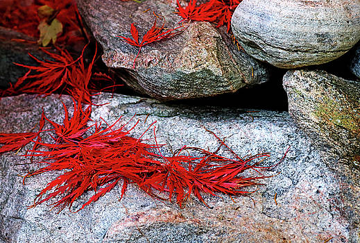 Japanese Maple Leaves In Red by Debbie Oppermann