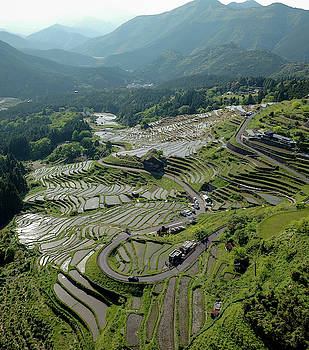 Japanese Rice paddies on a hill by Nate Richards