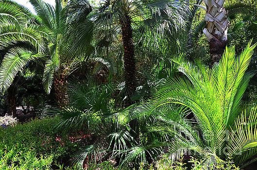Jardin Majorelle Garden Marrakech Palms 1  by Del Art
