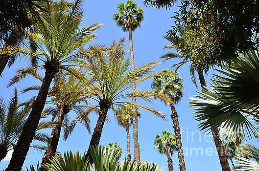 Jardin Majorelle Marrakech Palms 4 by Del Art