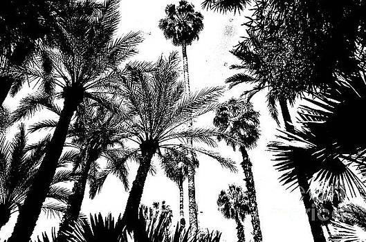 Jardin Majorelle Marrakech Palms Black White by Del Art