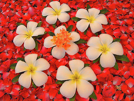 Jasmine Floral Display by David Smith