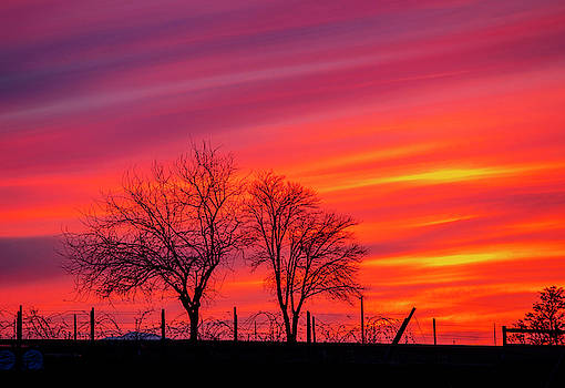 Jazzy's Sunset by Lynn Hopwood