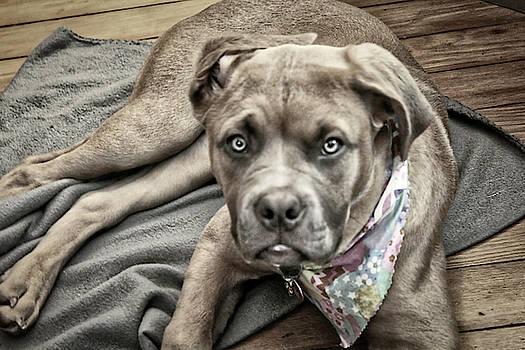 Jersey Dog by Todd Dunham