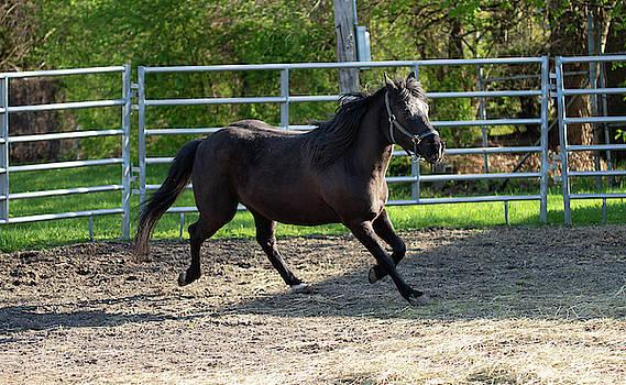 Jogging Horse by Diane Schuler