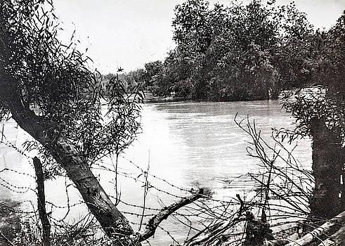 Jordan River Trees by Munir Alawi