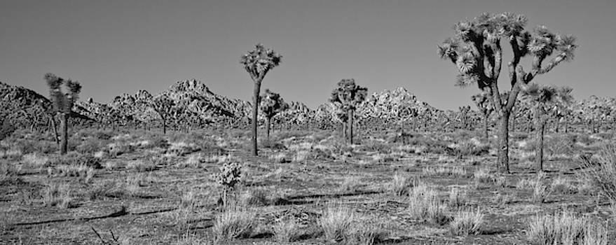 Joshua Desert Vista Black and White by Allan Van Gasbeck