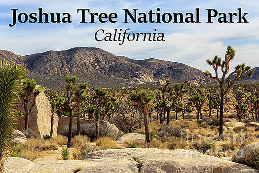 Joshua Tree National Park Valley, California by G Matthew Laughton