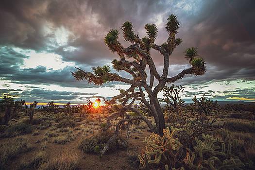 Joshua Tree Sunset by Matt Deifer