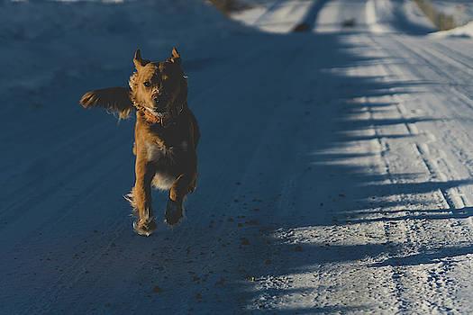 Julieta Belmont - Joyful dog
