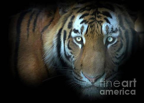 Jungle Cat by La Dolce Vita