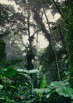 Jungle by Eugenio Opitz