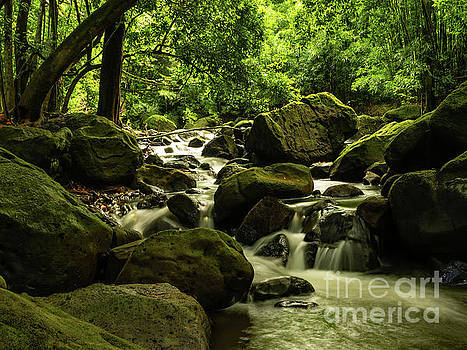 Asia Visions Photography - Jungle River