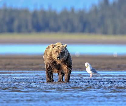 Just A Bear by Leigh Lofgren