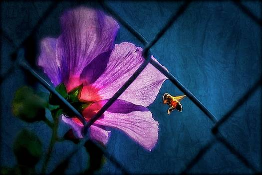 Just Beeing, Hibiscus and Bee by Flying Z Photography by Zayne Diamond