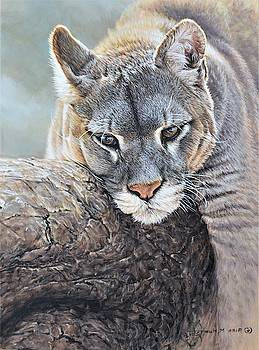Just Chillin - Cougar by Alan M Hunt by Alan M Hunt