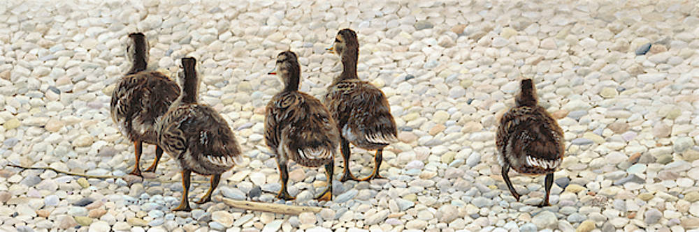 Just Waddling by Tammy Taylor