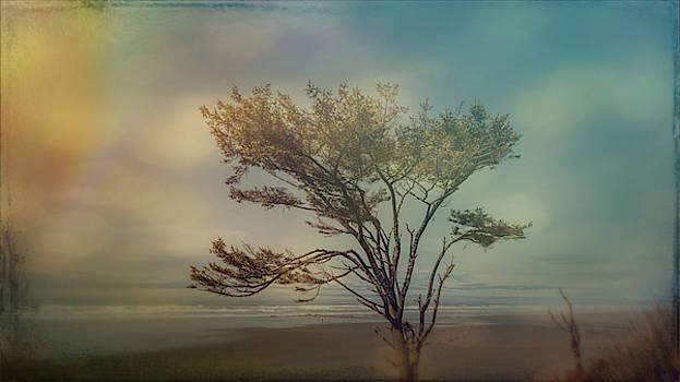 Mike Penney - Kalaloch Tree 108