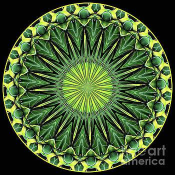 Kaleidoscope Natura by Anna Sheradon