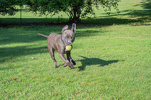Kaos And The Ball by Andrea Swiedler