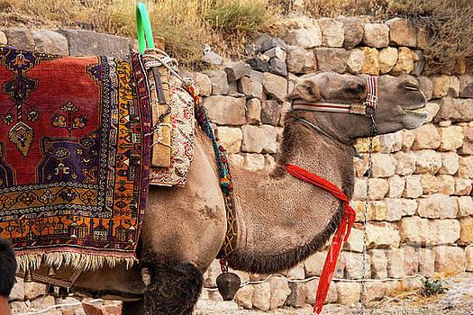 Bob Phillips - Kapadokya Transportation