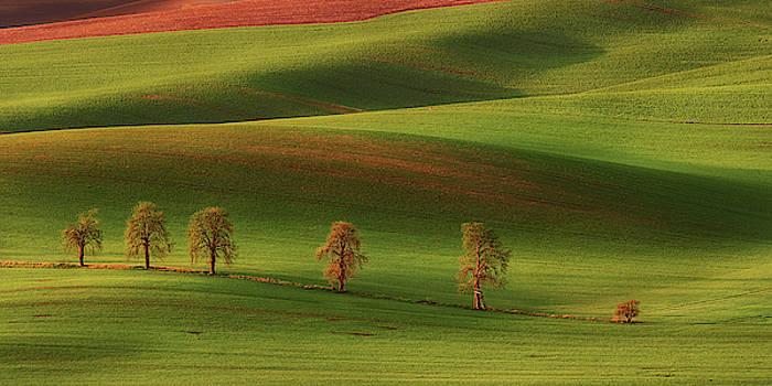 Karlin chestnuts by Marek Ondracek