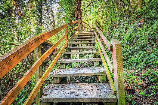 Kayak Point Trail Stairs by Spencer McDonald