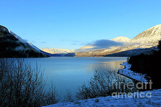 Kenai Lake Primrose Kenai Peninsula Alaska by Louise Heusinkveld