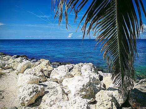 Key West Ocean View with Palm by Julie Harrington