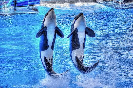 Killer Whales by Randy Dyer