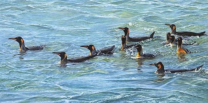 King Penguins Swimming by Alan M Hunt