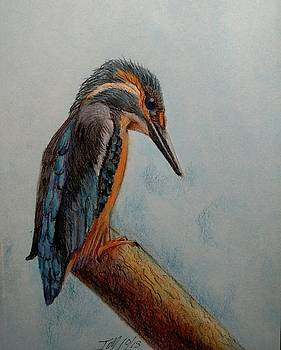 Kingfisher in profile by Joan Mansson