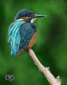 Kingfisher by Robert Bovasso